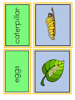 Butterfly Life Cycle Sorting Cards
