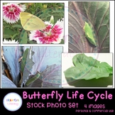 Butterfly Life Cycle Stock Photo Set