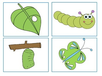 Butterfly Life Cycle - Story, Sequencing, Vocabulary Activities