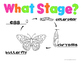 Butterfly Life Cycle Teacher/SLP Packet