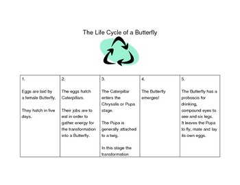 Butterfly Life Cycle: The Five Stages