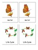 Butterfly Life Cycle Thematic Picture/Word Vocabulary Cards