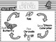 Butterfly Life Cycle & Anatomy Unit