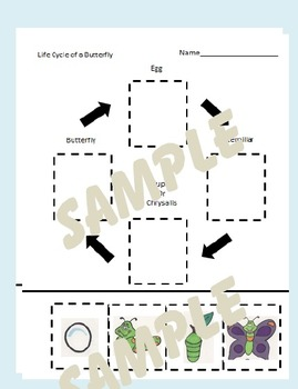 Butterfly Life Cycle Unit and Butterfly Activities