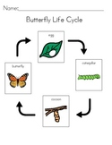 Butterfly Life Cycle Visual