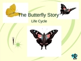 Butterfly, Life Cycle Vocabulary