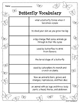 Butterfly Life Cycle: Vocabulary
