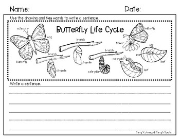 Butterfly Life Cycle Vocabulary Writing Paper