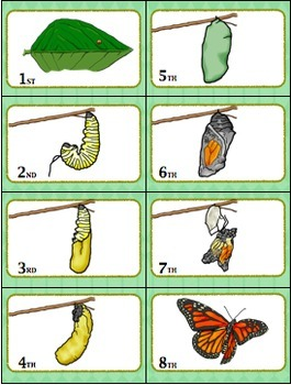 """Sequencing with Butterfly Life Cycle """"War"""" Card Game Science Center"""