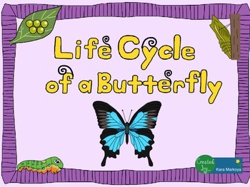 Butterfly Life Cycle Wheel and Teaching Cards