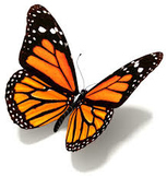 Butterfly Life Cycle Word Splash