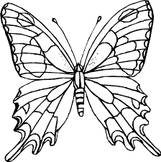 Butterfly Life Cycle Worksheet Cut and Paste