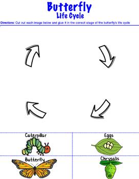 Butterfly Life Cycle Grade School Worksheet Printable
