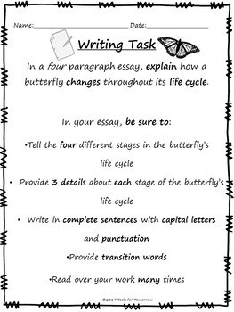 butterfly life cycle writing activity by tools for tomorrow tpt butterfly life cycle writing activity