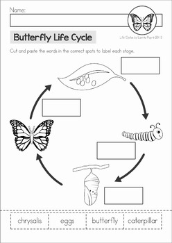 butterfly life cycle by lavinia pop teachers pay teachers. Black Bedroom Furniture Sets. Home Design Ideas