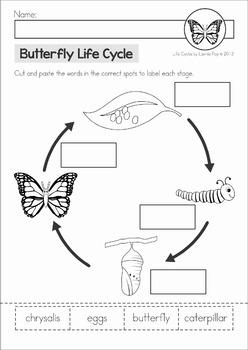 Butterfly Life Cycle By Lavinia Pop Teachers Pay Teachers
