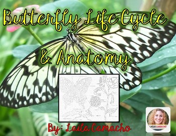 Butterfly Life Cycle and Anatomy Craft