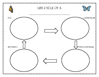 Butterfly Life Cycle and Diagram