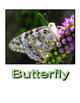 Butterfly Life Cycle (mini book)