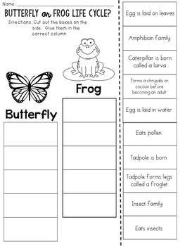 Butterfly Life Cycle or Frog Life Cycle? Cut and Paste Sorting Activity