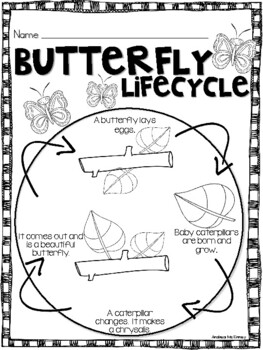 Butterfly Life Cycle using Macaroni