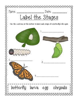Butterfly Life Cycles: Learn through texts, posters, writing, and illustrations!