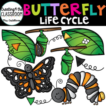 Butterfly Life Cyle Clip Art