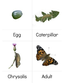 Butterfly Life cycle 3 part cards