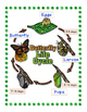 Butterfly Lifecycle Activities
