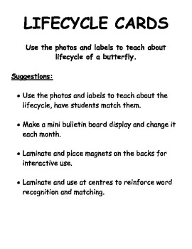 Butterfly Lifecycle Cards