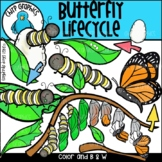 Butterfly Lifecycle Clip Art - Chirp Graphics