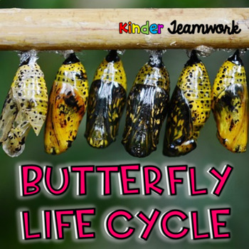 Butterfly Lifecycle Cut-and-Paste FREEBIE