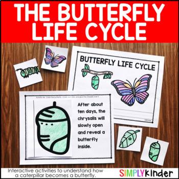 Butterfly Life Cycle Kindergarten