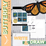 Worksheet on Butterfly Life Cycle with Directed Drawing