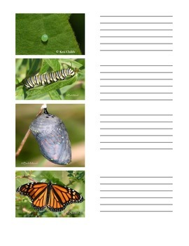 Butterfly Lifecycle PIctures