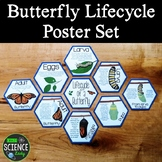 Butterfly Lifecycle Poster Set