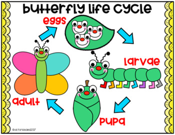 Butterfly Lifecycle Sequencing Freebie