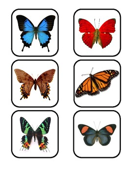 Butterfly Lifecycle printable mini unit for preschool & special education