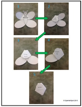 Butterfly (Mariposa) Foldable with Life Cycle Stages- English & Spanish