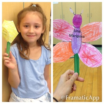 Butterfly (Mariposa) Foldable with Life Cycle Stages- Engl
