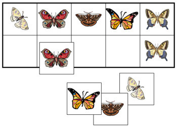 Butterfly Match-Up and Memory