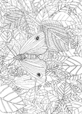 Butterfly/Moth Colouring In Sheet: Habitats and Ecology