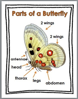 Butterfly Science with Movement Activities Literacy, and Math - Butterfly Unit