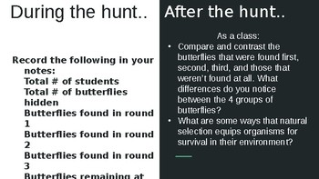 Butterfly Natural Selection