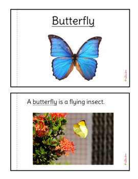 Butterfly Non-Fiction Packet for Autism / Special Education