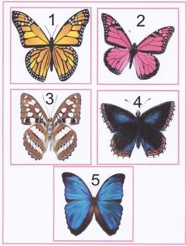 Butterfly Number Match