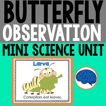Butterfly Observation : Metamorphosis Investigation