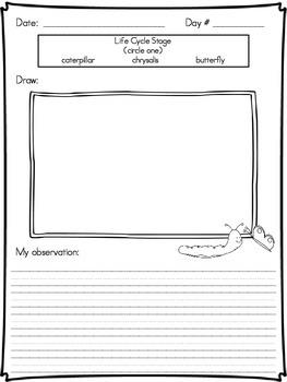 Butterfly Observation Notebook