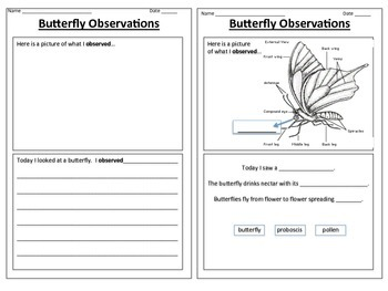 Butterfly Observations Graphic Organizer