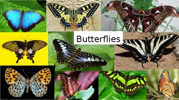 Butterfly Photo Bank / Library of Images for Drawing & Painting